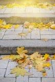 Όμορφο φθινόπωρο στο πάρκο Στοκ Φωτογραφίες