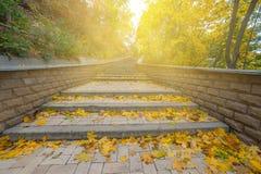Όμορφο φθινόπωρο στο πάρκο Στοκ εικόνα με δικαίωμα ελεύθερης χρήσης