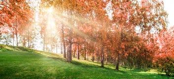 Όμορφο φθινόπωρο στο πάρκο στοκ εικόνες με δικαίωμα ελεύθερης χρήσης