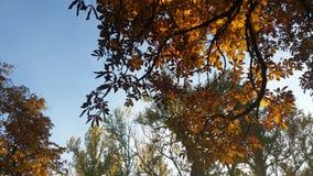 Όμορφο φθινόπωρο Στοκ Εικόνες