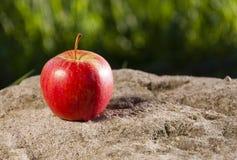 Όμορφο φρέσκο κόκκινο μήλο που βρίσκεται σε μια γκρίζα πέτρα στο πράσινο δασικό υπόβαθρο θαμπάδων Στοκ Φωτογραφίες