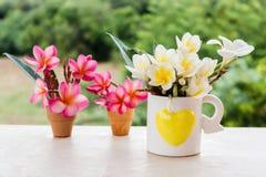 Όμορφο φρέσκο νέο μίνι άσπρο και κίτρινο plumeria λουλουδιών ή φ Στοκ Εικόνες