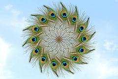 Όμορφο φτερό peacock στο υπόβαθρο ουρανού Στοκ φωτογραφία με δικαίωμα ελεύθερης χρήσης