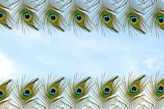 Όμορφο φτερό peacock στο υπόβαθρο ουρανού Στοκ φωτογραφίες με δικαίωμα ελεύθερης χρήσης