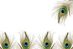 Όμορφο φτερό peacock ως υπόβαθρο με το διάστημα κειμένων Στοκ εικόνα με δικαίωμα ελεύθερης χρήσης