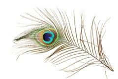 Όμορφο φτερό peacock ως υπόβαθρο με το διάστημα κειμένων Στοκ Εικόνες