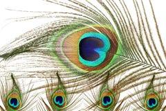Όμορφο φτερό peacock ως υπόβαθρο Στοκ εικόνα με δικαίωμα ελεύθερης χρήσης