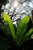 Όμορφο φτερών φύλλων πράσινο υπόβαθρο φτερών φυλλώματος φυσικό floral Στοκ Φωτογραφία