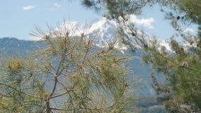 Όμορφο φυσικό υπόβαθρο Κλάδοι δέντρων πεύκων στο χιονώδες βουνό εστίασης και χειμώνα απόθεμα βίντεο