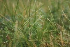 Όμορφο φυσικό φρέσκο πράσινο λιβάδι χλόης στο θερινό υπόβαθρο στοκ εικόνες