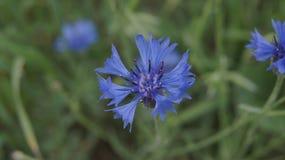 όμορφο φυτό Στοκ φωτογραφία με δικαίωμα ελεύθερης χρήσης