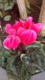 όμορφο φυτό στοκ εικόνες