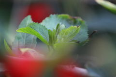 όμορφο φυτό Στοκ Φωτογραφία