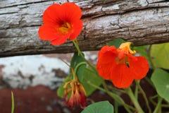 όμορφο φυτό Στοκ εικόνα με δικαίωμα ελεύθερης χρήσης