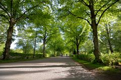 Όμορφο φως πρωινού στο νεκροταφείο της Ουψάλα με τον πράσινο τομέα χλόης Στοκ φωτογραφίες με δικαίωμα ελεύθερης χρήσης