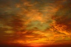 όμορφο φωτεινό ηλιοβασίλ& Στοκ Εικόνες