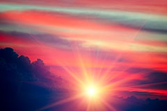 όμορφο φωτεινό ηλιοβασίλ& Στοκ Εικόνα