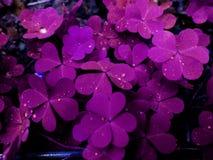 Όμορφο φύλλο hd στοκ φωτογραφία με δικαίωμα ελεύθερης χρήσης