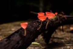 Όμορφο φλυτζάνι μυκήτων στο τροπικό δάσος Στοκ Εικόνες