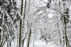 Όμορφο χειμερινό δάσος μετά από το πεσμένο χιόνι στοκ εικόνες