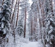 Όμορφο χειμερινό δάσος με τα δέντρα χιονιού Εικόνα στον μπλε τόνο στοκ εικόνες