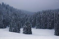 Όμορφο χειμερινό τοπίο με τα μπλε χιονισμένα δέντρα έλατου στο τ στοκ εικόνα