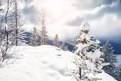 Όμορφο χειμερινό τοπίο με τα χιονισμένα δέντρα Στοκ Φωτογραφία