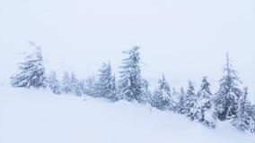 Όμορφο χειμερινό τοπίο με τα χιονισμένα δέντρα χειμώνας βουνών gudauri Καύκασου Γεωργία φιλμ μικρού μήκους