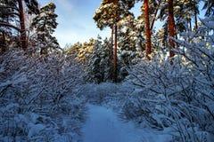 Όμορφο χειμερινό τοπίο με το δάσος, τα δέντρα και την ανατολή winterly πρωί μιας νέας ημέρας Τοπίο Χριστουγέννων με το χιόνι στοκ εικόνες
