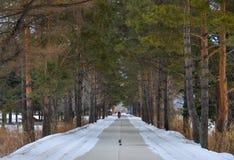 Όμορφο χειμερινό τοπίο με το χιονώδη δρόμο στοκ εικόνες