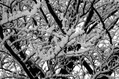 Όμορφο χειμερινό τοπίο - Σαξωνία, Γερμανία Στοκ φωτογραφία με δικαίωμα ελεύθερης χρήσης