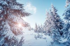 Όμορφο χειμερινό τοπίο Στοκ Φωτογραφία