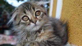 Όμορφο χνουδωτό γατάκι απόθεμα βίντεο