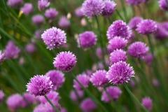 όμορφο χορτάρι λουλουδ στοκ εικόνες