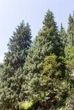 Όμορφο χριστουγεννιάτικο δέντρο στα βουνά το καλοκαίρι Στοκ εικόνα με δικαίωμα ελεύθερης χρήσης