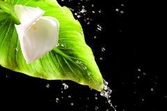 όμορφο ύδωρ παφλασμών λου& Στοκ Φωτογραφίες