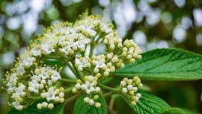 όμορφο ύδωρ ήλιων άνοιξη λουλουδιών Στοκ Φωτογραφίες