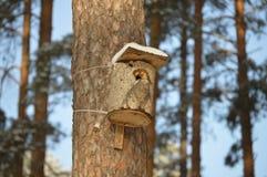 Όμορφο birdhouse Στοκ εικόνα με δικαίωμα ελεύθερης χρήσης