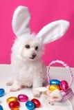 όμορφο bunny κουτάβι αυγών Πάσχας αυτιών Στοκ Φωτογραφίες