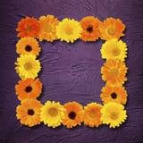 Όμορφο floral πλαίσιο Στοκ φωτογραφία με δικαίωμα ελεύθερης χρήσης