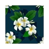 όμορφο floral πρότυπο άνευ ραφής Στοκ Εικόνες