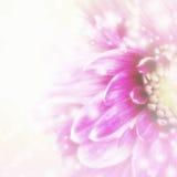 όμορφο floral ροζ ανασκόπησης Στοκ Φωτογραφίες