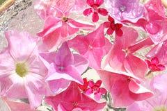 Όμορφο, floral ροζ, υπόβαθρο Στοκ Φωτογραφίες