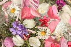 Όμορφο, floral ροζ, υπόβαθρο Στοκ εικόνες με δικαίωμα ελεύθερης χρήσης