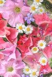 Όμορφο, floral ροζ, υπόβαθρο Στοκ Εικόνα