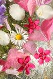 Όμορφο, floral ροζ, υπόβαθρο Στοκ εικόνα με δικαίωμα ελεύθερης χρήσης
