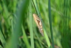 Όμορφο grasshopper… απολαμβάνει στο λουλούδι στοκ φωτογραφίες με δικαίωμα ελεύθερης χρήσης