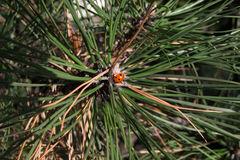 όμορφο ladybug Στοκ εικόνες με δικαίωμα ελεύθερης χρήσης