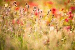 όμορφο lavender πεδίων λεπτομέρε Στοκ εικόνες με δικαίωμα ελεύθερης χρήσης
