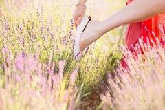 όμορφο lavender πεδίων Στοκ φωτογραφία με δικαίωμα ελεύθερης χρήσης